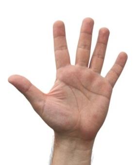 Ob Kurzstatement oder 20minütige Präsentation, mit Ihren 5 Fingern behalten Sie stets die Reihenfolge Ihrer Argumentation fest in Ihrer Hand.